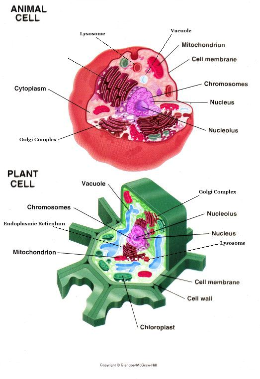parts of a cell...