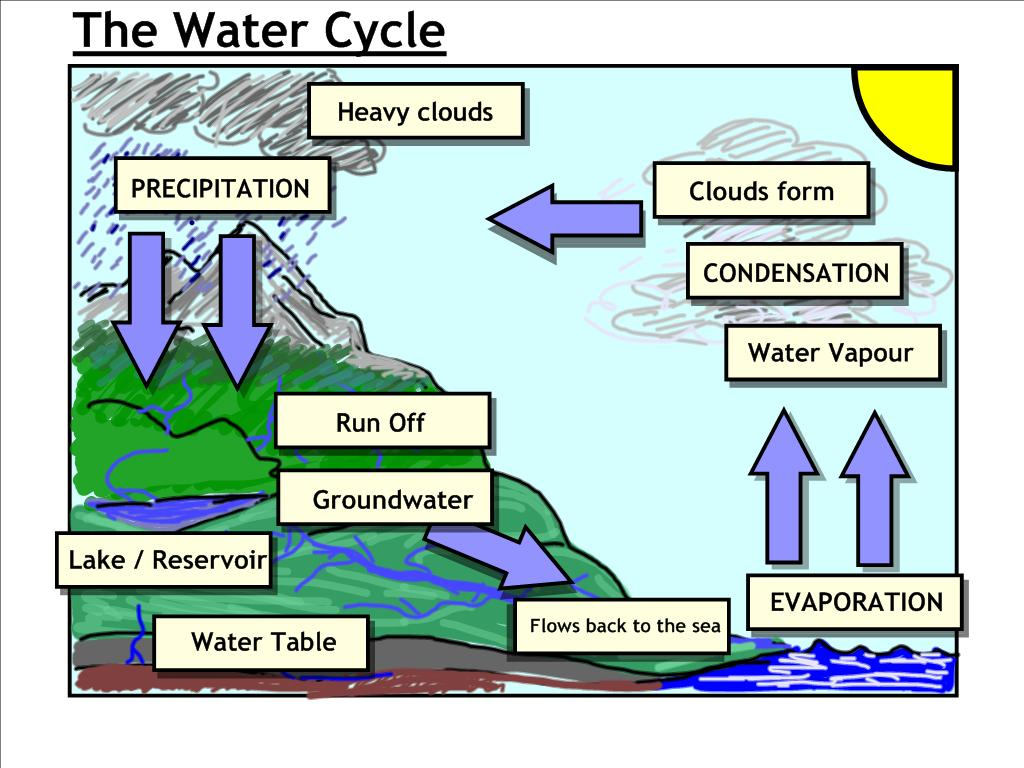 Water Cycle Diagram Labeled Week 5 cycles nitrogen oxygen