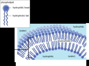 biobook_cells_14a