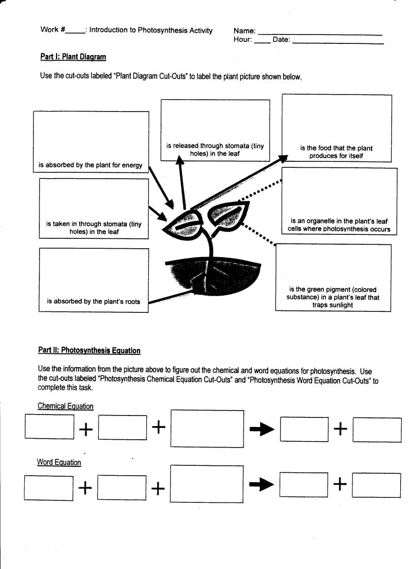 Photosynthesis And Cellular Respiration Worksheets Photos ...