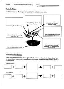 plantcellquestionsforcutouts 001