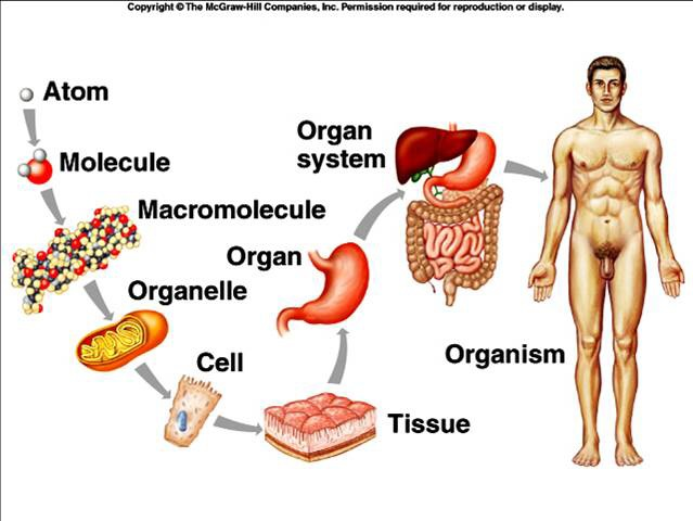 Week 33 Body Systems and Physiology | MrBorden's Biology ...