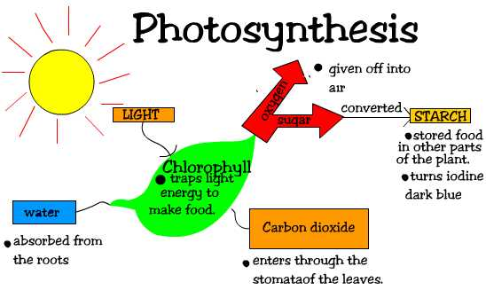 Week 11 Photosynthesis and Biome Project | MrBorden's ...
