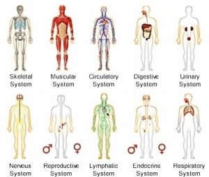 body-systems1