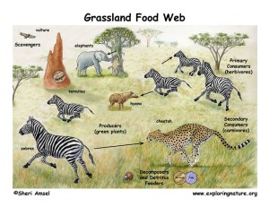 savannah_foodweb72